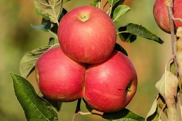 srostlá jablka