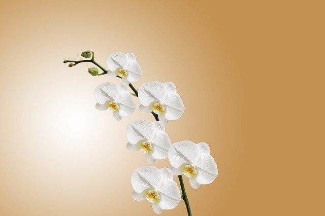 Pěstování orchidejí pro začátečníky