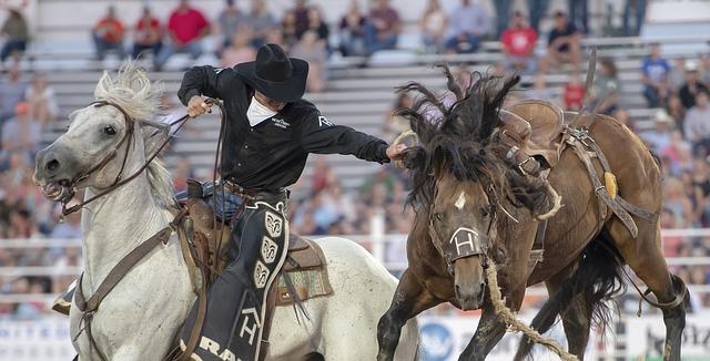 americký kovboj chytá koně