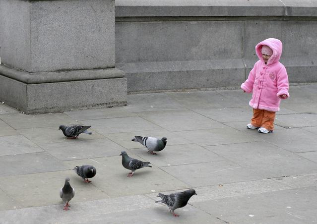dítě připraveno vrhnout se mezi holuby na náměstí